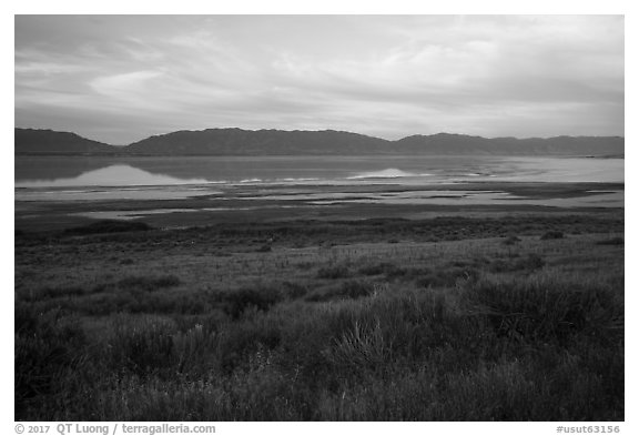 Sagebrush and mountains reflected in Great Salt Lake. Utah, USA (black and white)