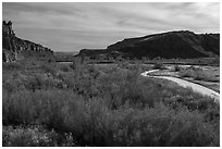 Autum foliage and stream, Cottonwood Canyon. Grand Staircase Escalante National Monument, Utah, USA ( black and white)