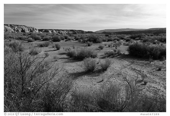 Desert shrubs in Wahweap Wash. Grand Staircase Escalante National Monument, Utah, USA (black and white)