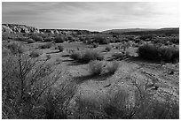 Desert shrubs in Wahweap Wash. Grand Staircase Escalante National Monument, Utah, USA ( black and white)