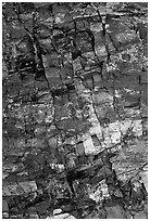 Petrified wood, Escalante Petrified Forest State Park. Utah, USA ( black and white)