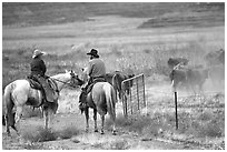 Cowboys and cattle. Utah, USA (black and white)