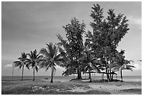Beachfront with palm trees and huts. Phu Quoc Island, Vietnam (black and white)