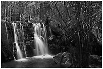 Waterfall flowing in tropical forest. Phu Quoc Island, Vietnam (black and white)