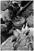 Men preparing ducks, Duong Dong. Phu Quoc Island, Vietnam (black and white)