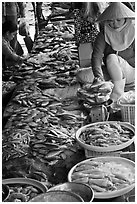 Fish for sale at public market, Duong Dong. Phu Quoc Island, Vietnam (black and white)