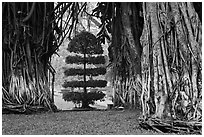 Banyan trees framing a topiary tree in park. Ho Chi Minh City, Vietnam ( black and white)