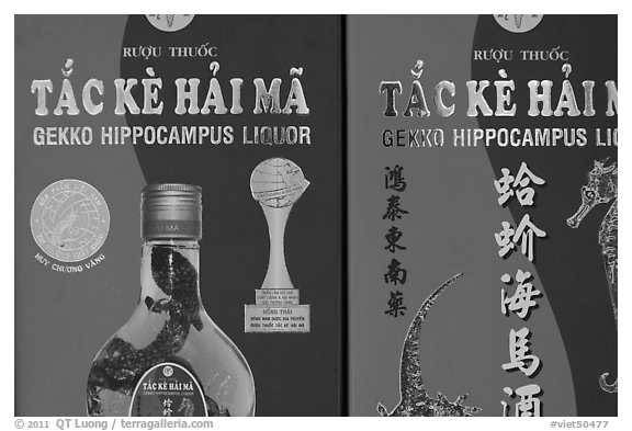 Close-up of Gekko Hippocampus liquor used in traditional medicine. Cholon, Ho Chi Minh City, Vietnam (black and white)