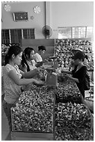 Women packing coconut candy for sale. Ben Tre, Vietnam (black and white)