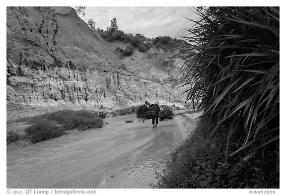 Woman carrying leaves through Fairy Stream. Mui Ne, Vietnam (black and white)