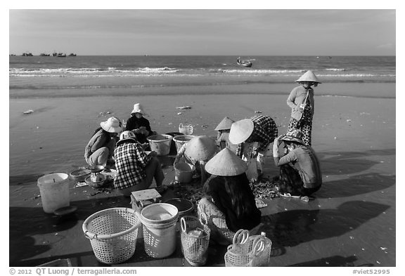 Women on beach sorting fresh catch. Mui Ne, Vietnam (black and white)