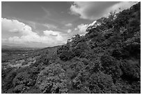 Hillside covered in verdant vegetation. Ta Cu Mountain, Vietnam ( black and white)