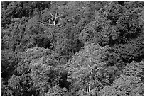 Tropical forest canopy. Ta Cu Mountain, Vietnam ( black and white)