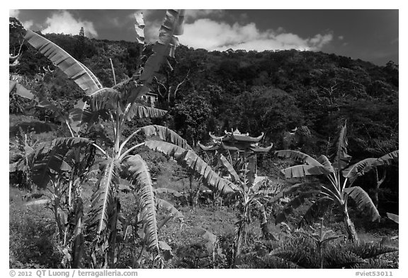 Banana trees, hill, and temple gate. Ta Cu Mountain, Vietnam (black and white)