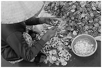 Woman extracting meat from scallops. Mui Ne, Vietnam (black and white)