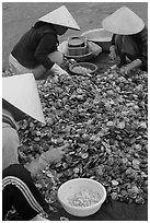 Processing fresh scallops by hand on the beach. Mui Ne, Vietnam (black and white)