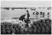 Shells packed for sale on beach, Lang Chai. Mui Ne, Vietnam (black and white)