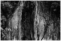 Limestone wall and vegetation. Da Nang, Vietnam (black and white)