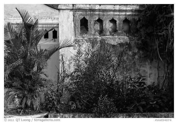 Vegetation and walls detail. Hoi An, Vietnam (black and white)