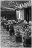 Bonsai trees in palace courtyard, citadel. Hue, Vietnam ( black and white)