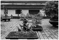 Bonsai trees, Thien Mu pagoda. Hue, Vietnam (black and white)