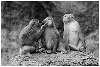 Three monkeys. Halong Bay, Vietnam (black and white)