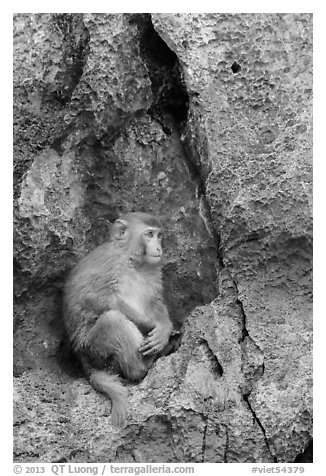 Monkey on cliff. Halong Bay, Vietnam (black and white)