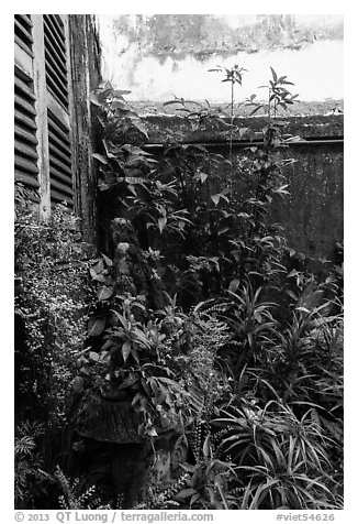 Lush balcony corner. Ho Chi Minh City, Vietnam (black and white)