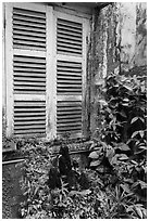 Plants and window shutters. Ho Chi Minh City, Vietnam (black and white)