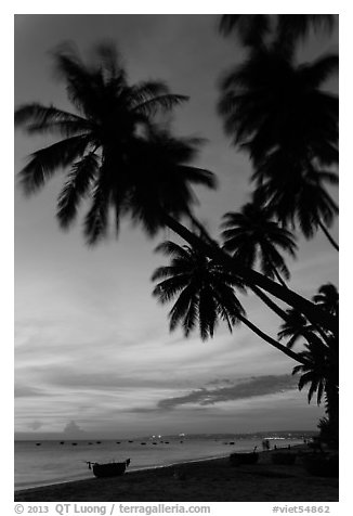 Beach at sunset with palm trees and coracle boats. Mui Ne, Vietnam (black and white)