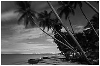 Palm-tree lined beach at night. Mui Ne, Vietnam (black and white)