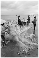 Woman folding fishing net. Mui Ne, Vietnam (black and white)