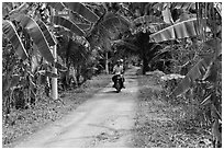 Narrow rural road bordered by banana trees. Ben Tre, Vietnam (black and white)