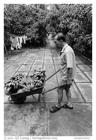 Man with wheelbarrow filled with bananas and coconuts. Ben Tre, Vietnam (black and white)