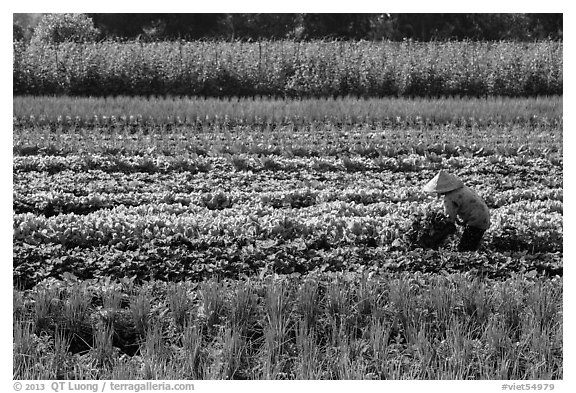 Woman in field of vegetables. Tra Vinh, Vietnam (black and white)