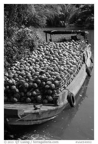Barge loaded with coconuts. Tra Vinh, Vietnam (black and white)