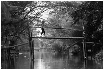 Villager crossing monkey bridge. Can Tho, Vietnam (black and white)