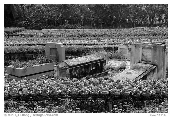 Tombs amidst rows of potted flowers. Sa Dec, Vietnam (black and white)
