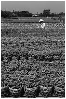 Woman tending to flowers. Sa Dec, Vietnam ( black and white)