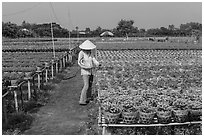 Woman caring for flowers in nursery. Sa Dec, Vietnam ( black and white)