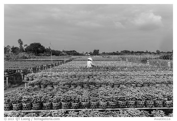 Rows of potted plants. Sa Dec, Vietnam (black and white)
