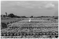 Rows of potted plants. Sa Dec, Vietnam ( black and white)