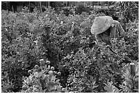 Man working in fruit orchard. Sa Dec, Vietnam ( black and white)