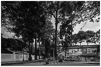 Tall trees on street through Tao Dan park. Ho Chi Minh City, Vietnam ( black and white)