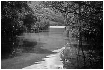 Channel in mangrove forest, Bay Canh Island, Con Dao National Park. Con Dao Islands, Vietnam ( black and white)