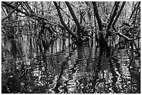 Mangroves and reflections, Bay Canh Island, Con Dao National Park. Con Dao Islands, Vietnam ( black and white)