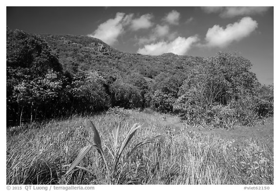 Grasses and dry tropical forest, Bay Canh Island, Con Dao National Park. Con Dao Islands, Vietnam (black and white)