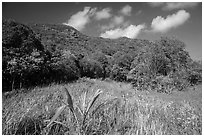 Grasses and dry tropical forest, Bay Canh Island, Con Dao National Park. Con Dao Islands, Vietnam ( black and white)