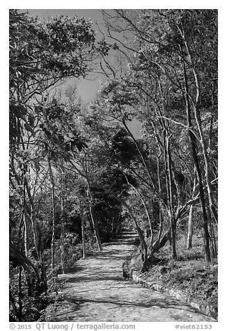 Trail through forest, Bay Canh Island, Con Dao National Park. Con Dao Islands, Vietnam (black and white)