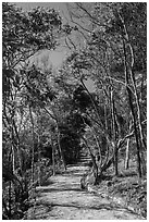 Trail through forest, Bay Canh Island, Con Dao National Park. Con Dao Islands, Vietnam ( black and white)